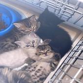 قطط - السلام عليكم  عندي