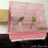 طيور البيع