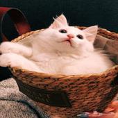 قطط - 3قطط صغيره   عمر 5