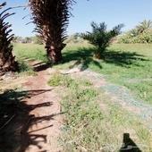 مزرعة للبيع في طريق جده ومدينه
