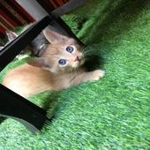 قطه أليفة -4 صغار