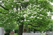 بذور زهور ونباتات برية واشجار ظل وزينة