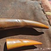 قرون زراف وحيد القرن