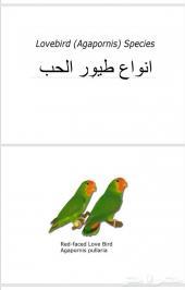 انواع طيور الحب ( الروز ) 30