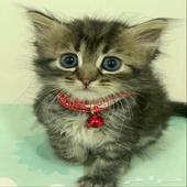 قطط - اسم القطه   لونا