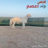 مشروع فحل حري