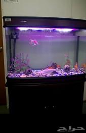 حوض سمك كبير مع حوالي 10 حبات سمك زينه