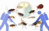شركة رش مبيدات مكافحة حشرات رش مبيد بالرياض