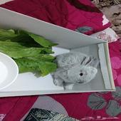 ارنب صغير للبيع 30 ريال