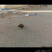 كلاب في محطه مهجورة خط الرياض الدمام