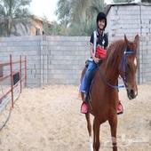 خيل تدريب خيل فروسية تعليم ركوب خيل horse riding courses
