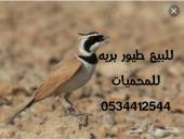 للبيع طيور بريه للمحميات
