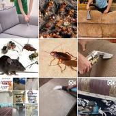 شركة تنظيف بالرياض و رش مبيدات حشرات بالرياض