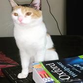قطه انثى للتزاوج