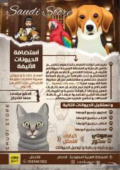 فندقة الحيوانات Hosting pets