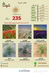 عرض بذور النباتات البرية