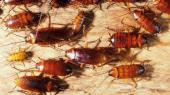 مكافحة حشرات  وفئران وصراصير ورش مبيدات