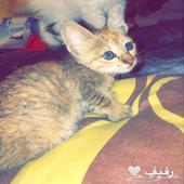 قطه ماوي عربي للتبني