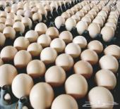 للبيع بيض بلدي مخصب