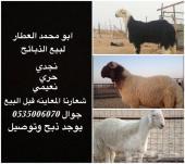 خرفان ورخال ( نعيم و نجد )