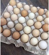 للبيع بيض بلدي وفيومي مخصب