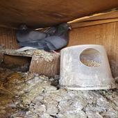 خمس اجواز قطايف توب التب