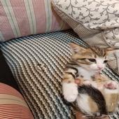 قطط صغيره للتبني