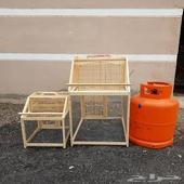 مصايد وطيور زيبرا هولندي منتجه للبيع