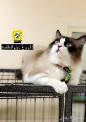 لفندقة تلقيح وتدريب الكلاب والقططKennel_care