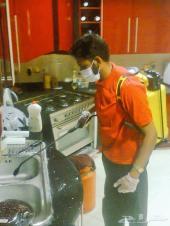 شركة مكافحة حشرات بالرياض 0552020037
