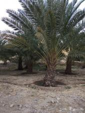 مزرعه للبيع في القوباء(بيشه)