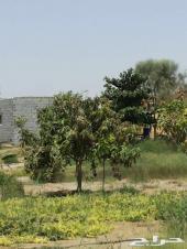 مزرعه للبيع أو الأيجار بالقنفذه 38ألف م2