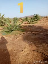 مزارع في المليليح صك اكتروني