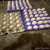 بيض دجاج فيومي وبلدي مخصب وللمائده
