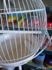 علافات طيور صغيرة تستخدم للفيتامين وغيره