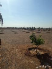 عامل مزرعة من صعيد مصر يبحث عن عمل استقدام