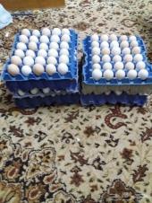 للبيع بيض دجاج مخصب بلدي