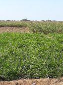 مزرعة للبيع في مستورة
