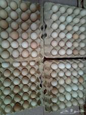 عرض العيد بيض بلدي