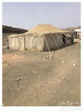 خيمة عمودين صباحية