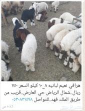 هرافي نعيم 750 ريال ..شمال الرياض