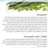 بذور يسر العربي