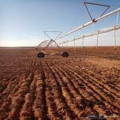 للايجار مشروع زراعي موسم قمح 37 هكتار