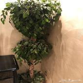 شجرة ونجفة للبيع