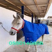 جلال خيول ضد المطر والبرد