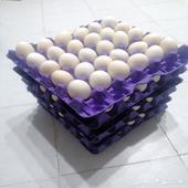 بيض بلدي مائدة إنتاج يومي إعلان دائم