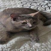 قطط سكوتش جوز ذكر وانثى