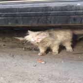 أنقاذ وتبني قطه