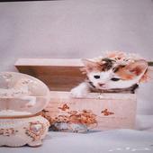 قطة للتبني مع سعر رمزي في الشرقية