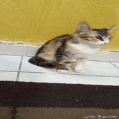 قطة انثى للتبني